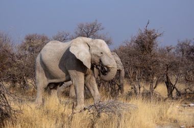 Safari original au Botswana